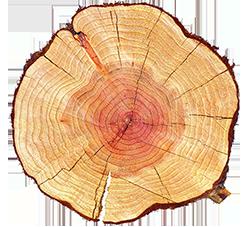 filiera del legno