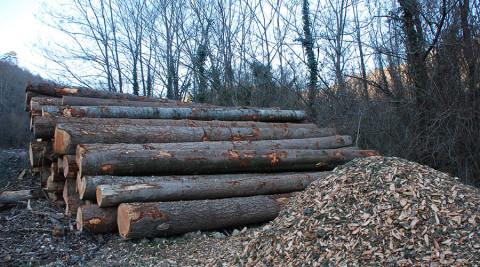cippatura, taglio del bosco